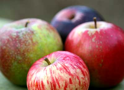4 apples depicting heirloom varieties