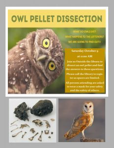 Owl Pellet Dissection at Yancey Library!